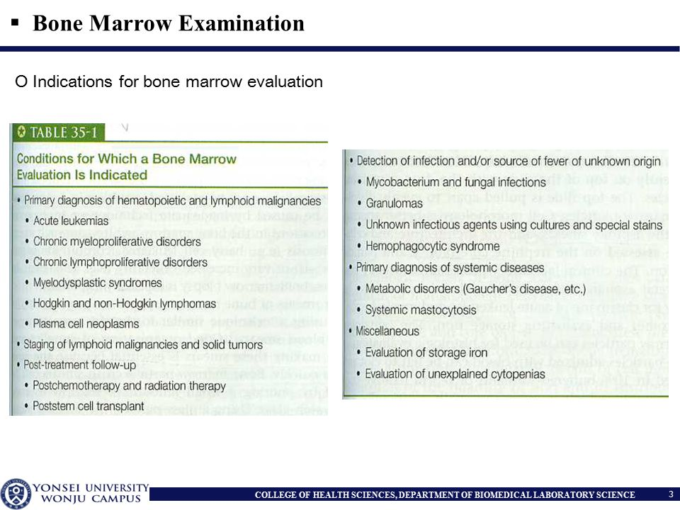 Part II Bone Marrow Examination - ppt video online download