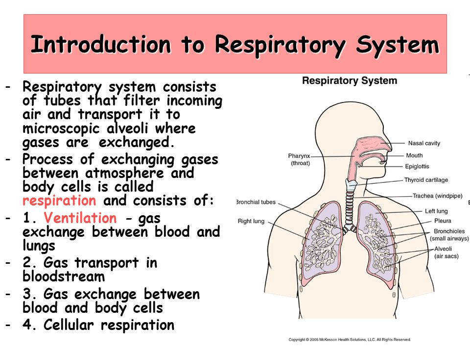 Respiratory System Ppt Download