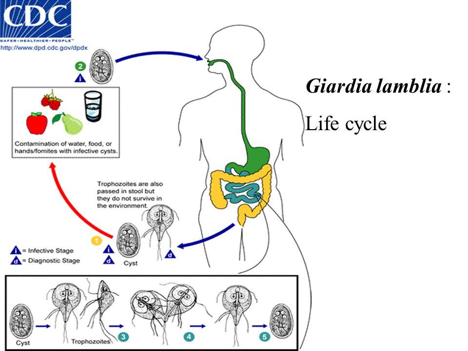 parazita fertőzés kimutatása férgek homeopátia komplex készítmények