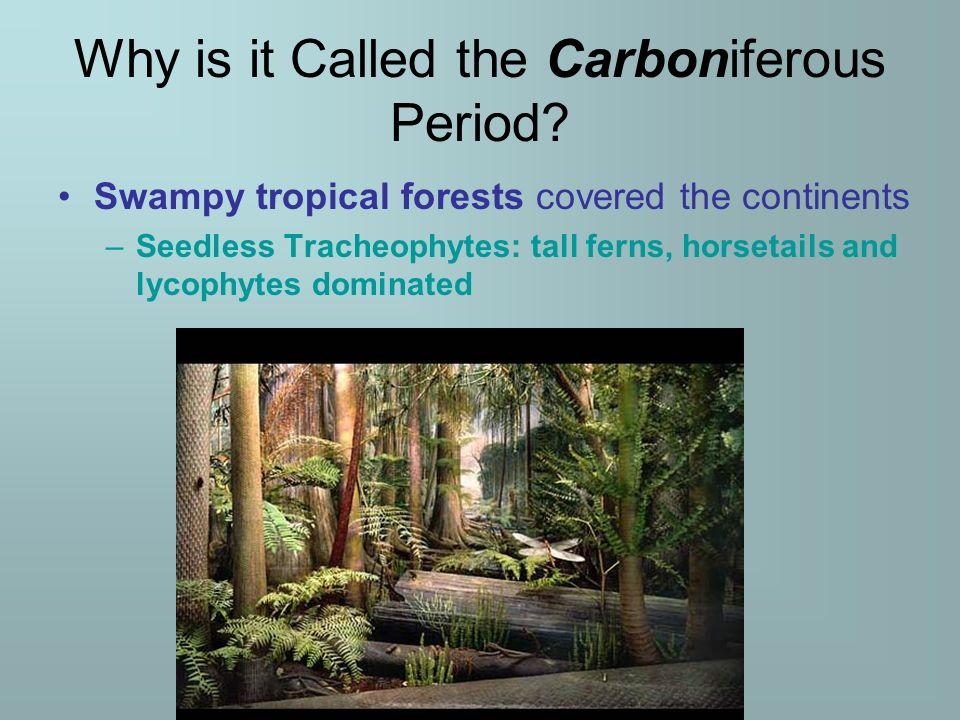 Lecture 5 Carboniferous Pd Mississippian Pennsylvanian 360 Mya