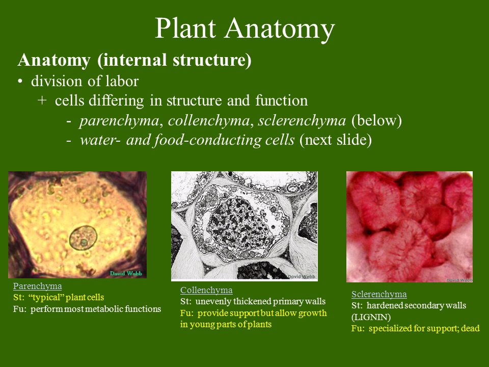 Plant Structure Growth and Development - ppt video online download