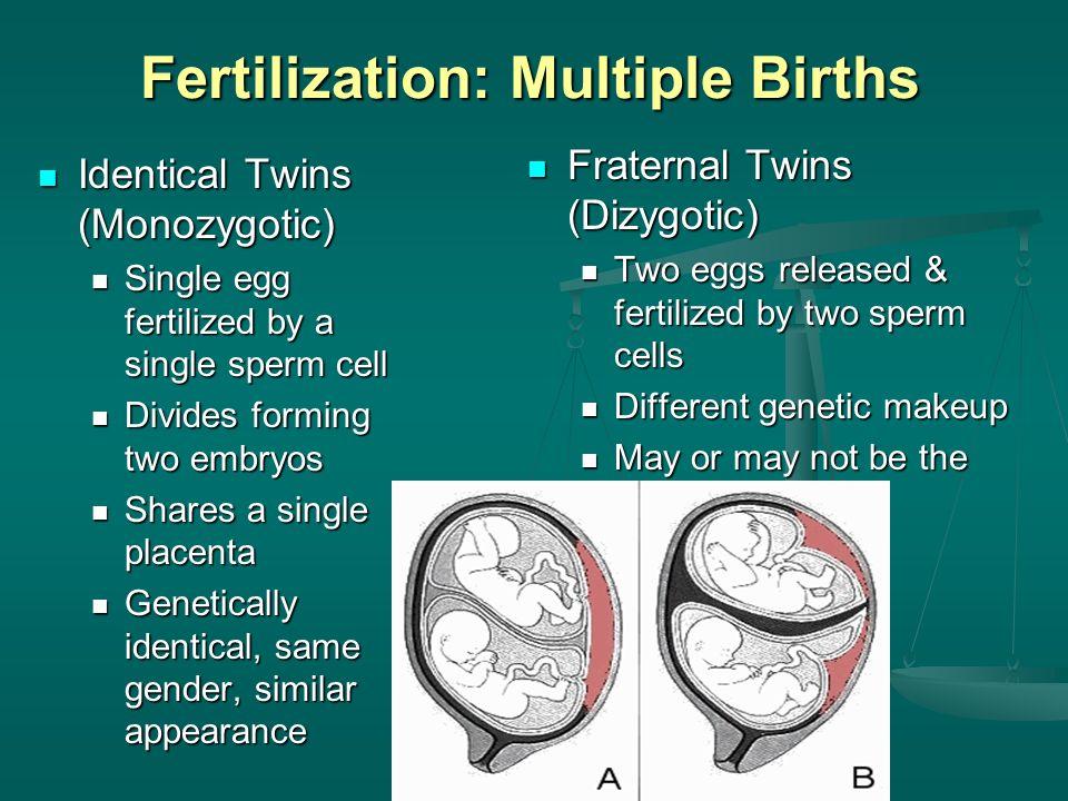 Pregnancy, Growth, Development and Genetics - ppt video