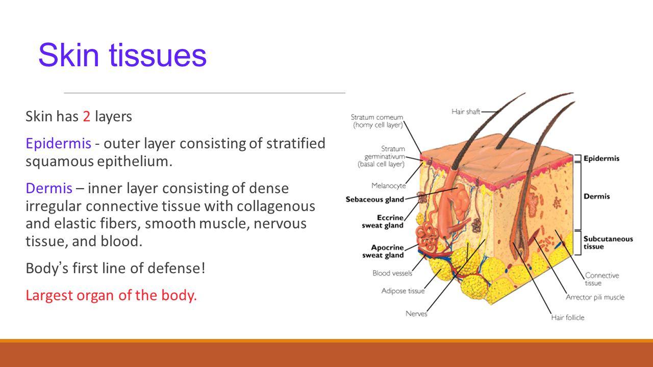 Muscle Membrane Diagram Wiring Diagram Master Blogs