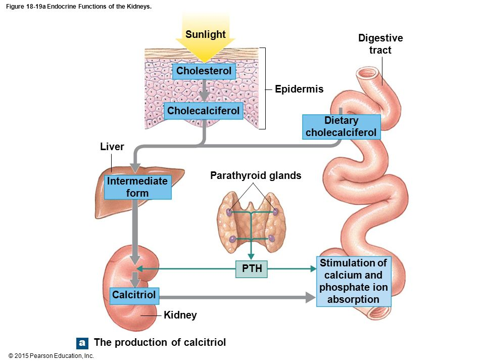 Picture Diagram Of Endocrine Functions Block And Schematic Diagrams