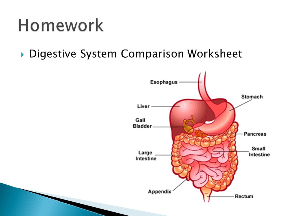 The Digestive System. - ppt download