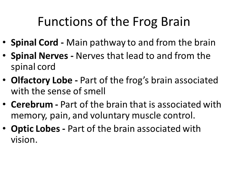 Frog Brain Functions Diagram - Auto Electrical Wiring Diagram •