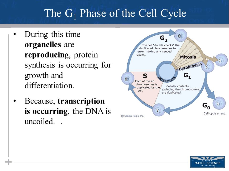 01 introduction to cell respiration student handouts ppt download