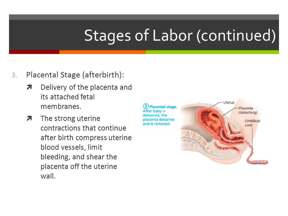 nursing care plan acute pain uterine contractions Advertise nursing diagnosis and nursing interventions for preeclampsia - these days we want to discuss the article with the title health nursing diagnosis and nursing interventions for preeclampsia we hope you get what you're looking for.