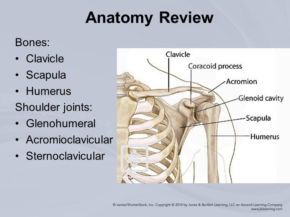 Injuries To The Shoulder Region Ppt Download