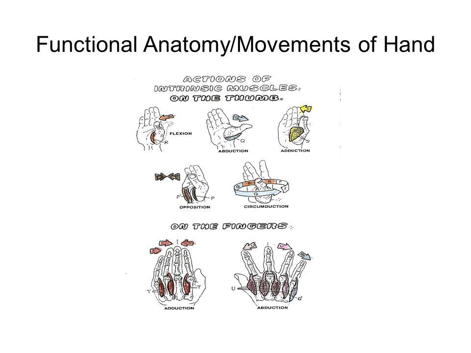 Elbow, Wrist, Hand & Fingers Anatomy & Injuries - ppt video online ...
