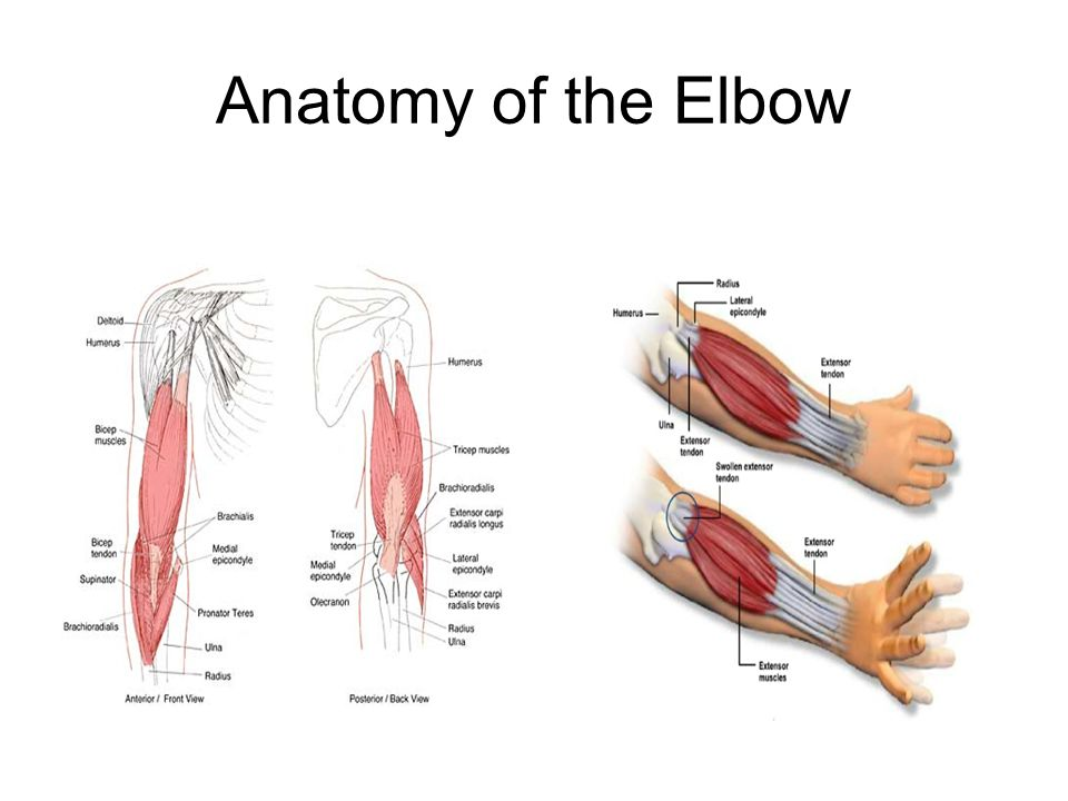 Elbow, Wrist, Hand & Fingers Anatomy & Injuries - ppt video online ...