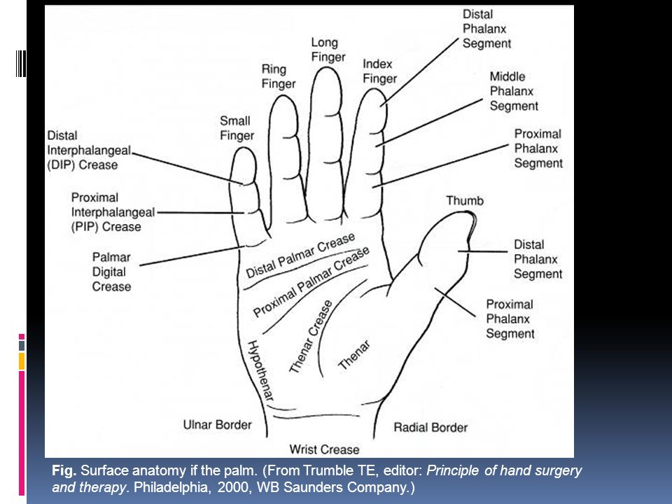 Injuries and Diseases of Hand and Wrist - ppt video online download