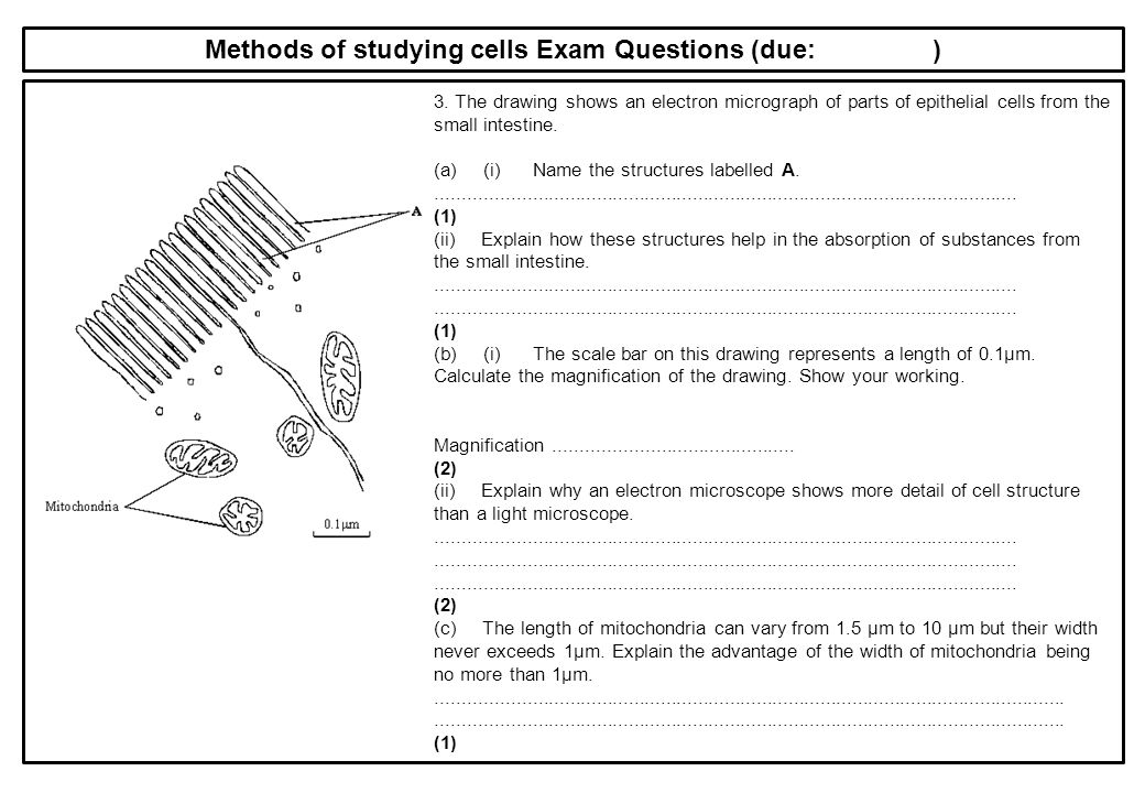 32 cells comments required practicals ppt download methods of studying cells exam questions due ccuart Image collections