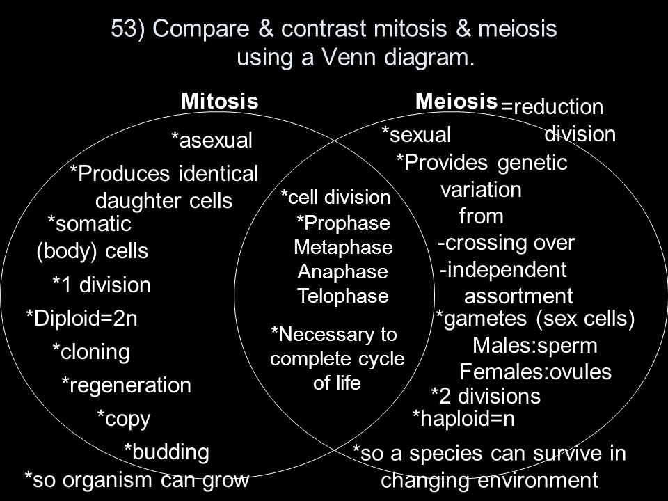 53 compare contrast mitosis meiosis using a venn diagram