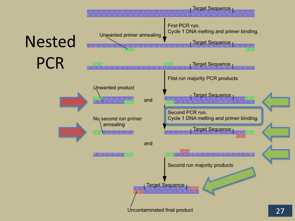 nested pcr diagram