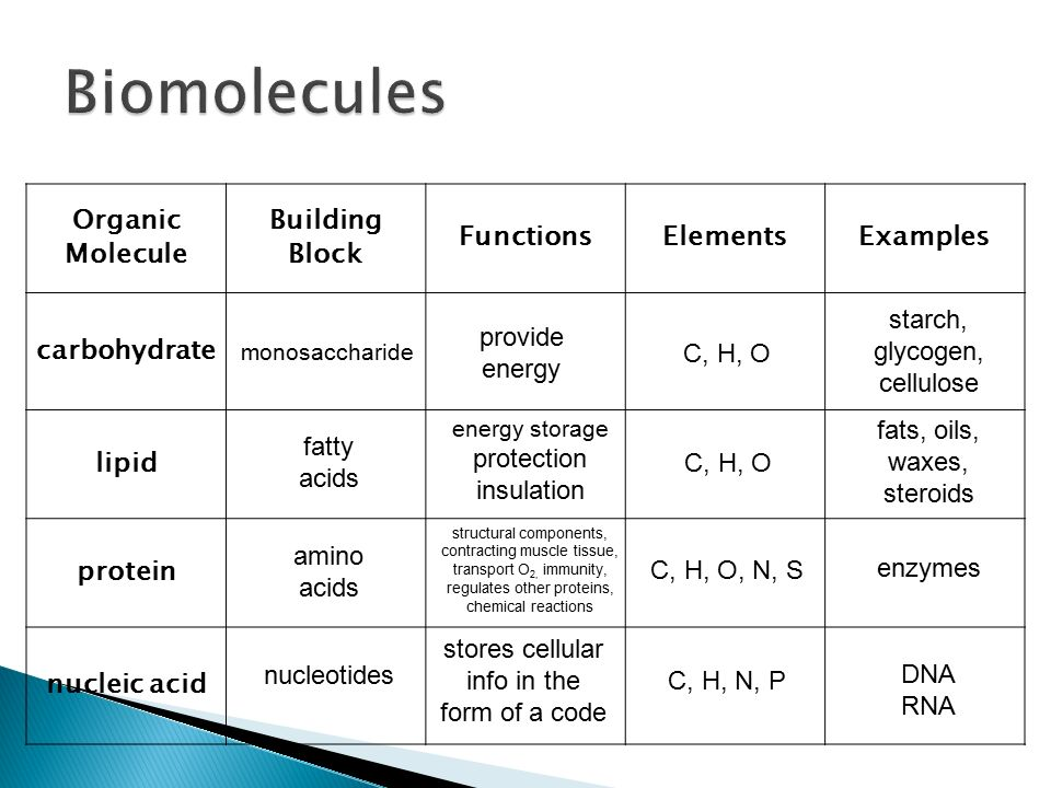 Describe The Building Blocks Of Carbohydrates