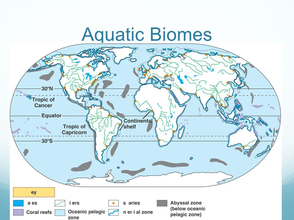Elegant 23 Aquatic Biomes
