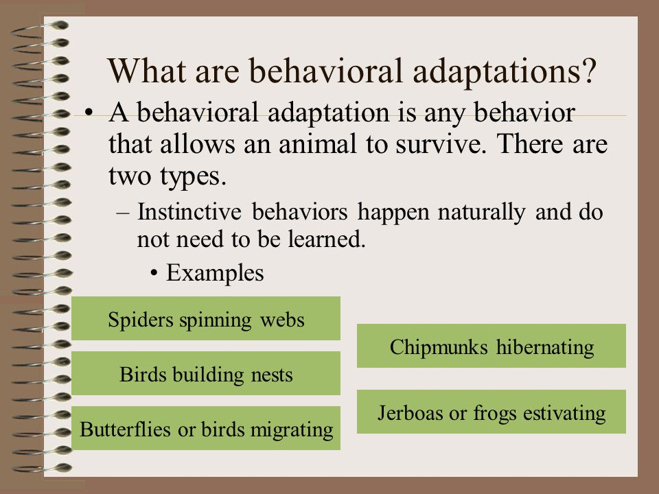 Animal Adaptations And Interactions Ppt Video Online Download
