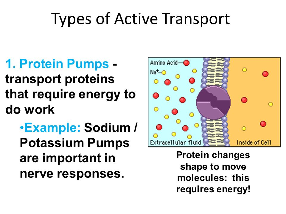 What types of transport use proteins