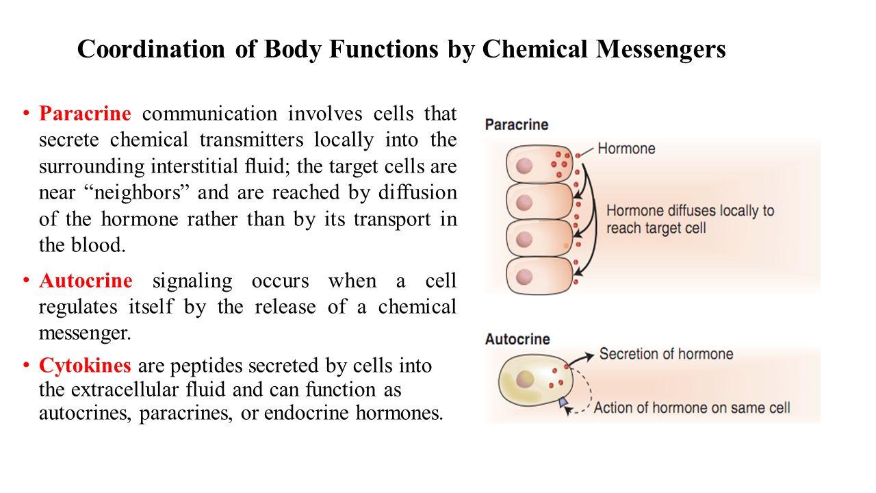 Exocytosis Golgi Apparatus