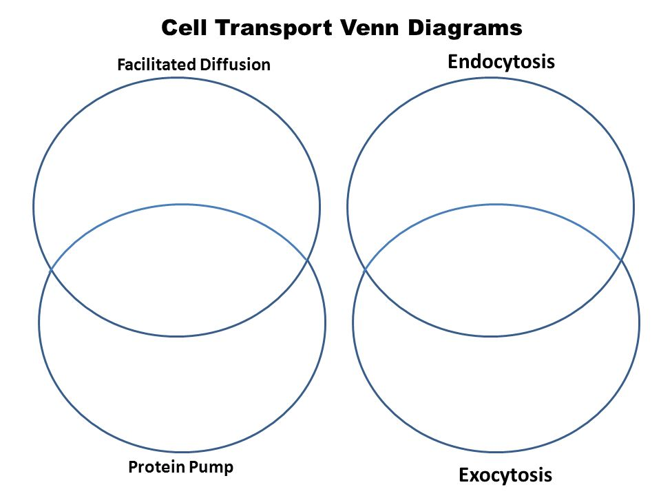 Passive Transport Does Not Require The Diffusion Of Ppt