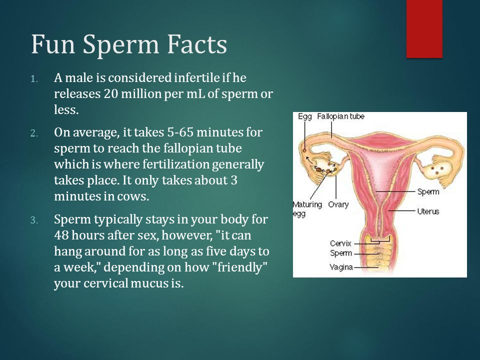 180 million sperm egg fertilization human foto 618
