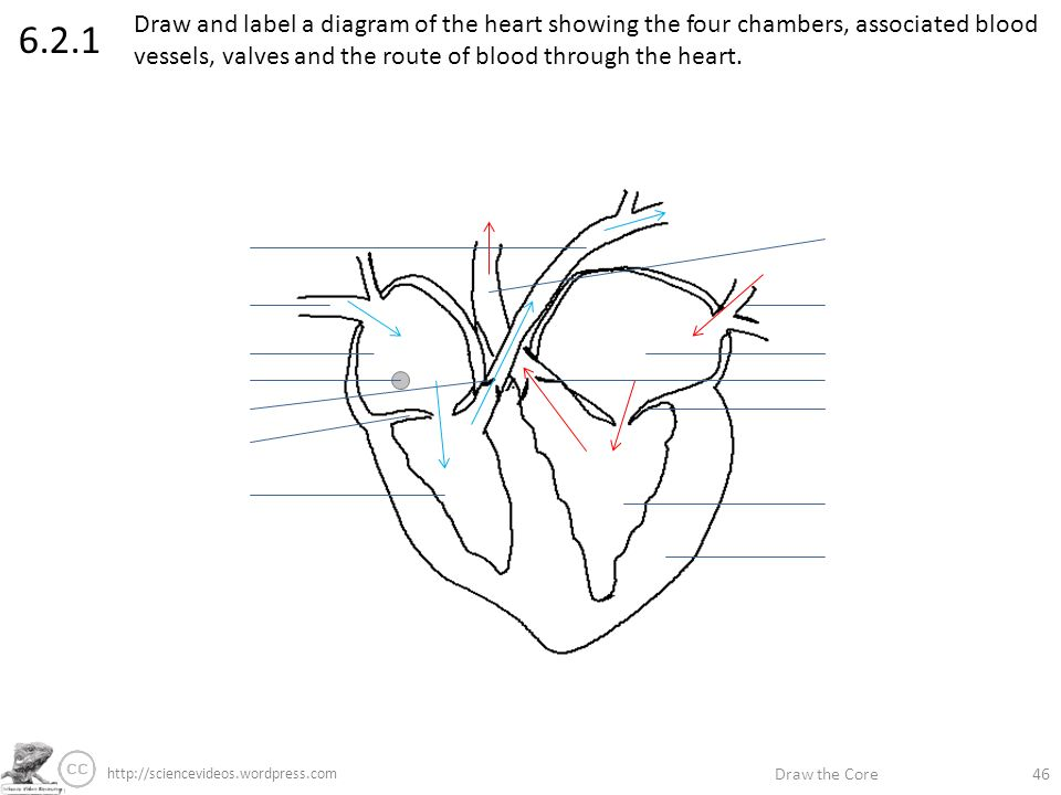 Draw the core label if youre able annotate if youre great ppt draw and label a diagram of the heart showing the four chambers associated blood vessels ccuart Choice Image