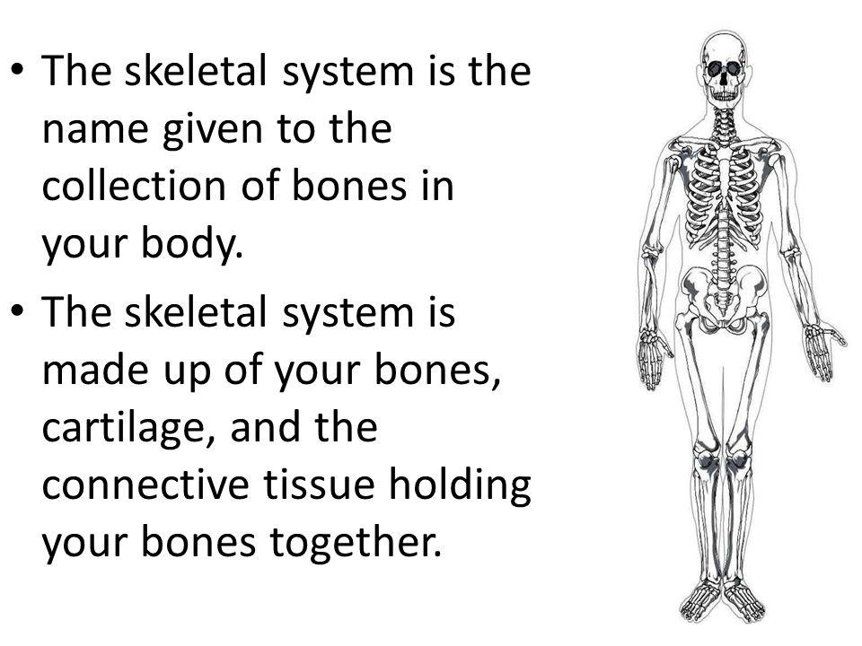 Skeletal System Is Your Skeletal System Alive Ppt Video Online