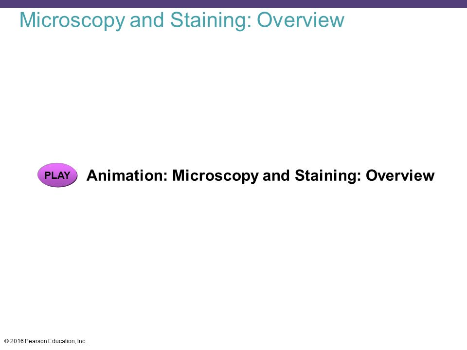 Microscopy and Staining: Overview