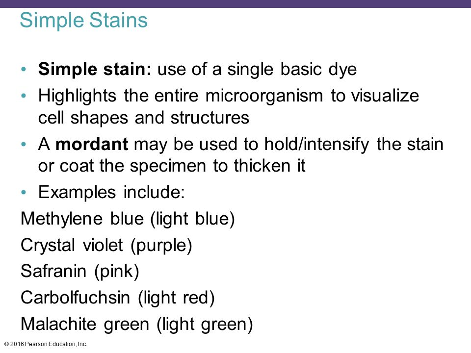 Simple Stains Simple stain: use of a single basic dye