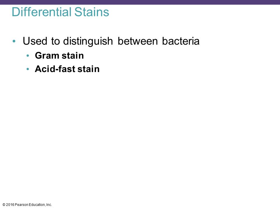 Differential Stains Used to distinguish between bacteria Gram stain