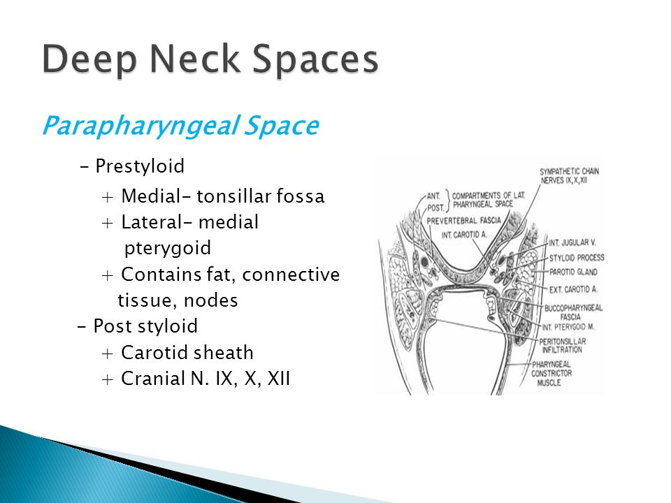 Deep Neck spaces and Infection - ppt download