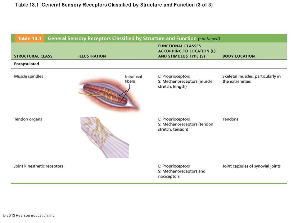 how are sensory receptors classified