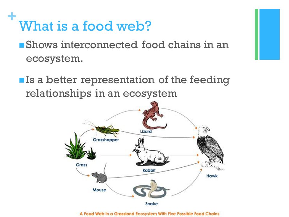 create a food web assignment