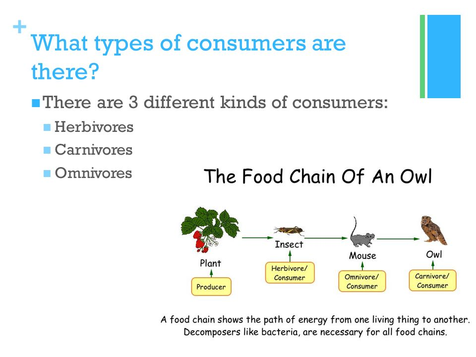 what are 3 types of consumers