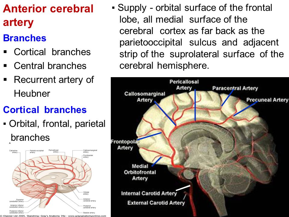 Blood supply to the brain - ppt video online download