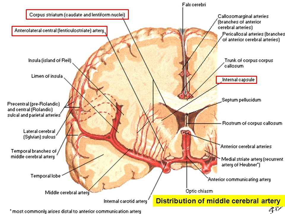 Blood Supply To The Brain Ppt Video Online Download