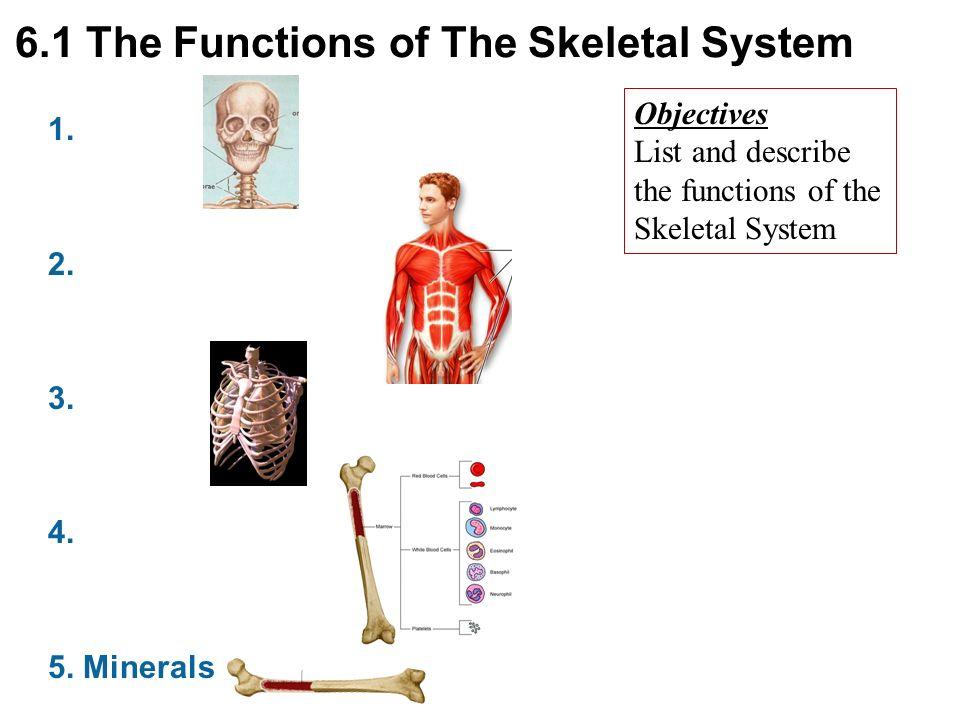 Ch 6 Bone Tissue The Skeletal System Ppt Download