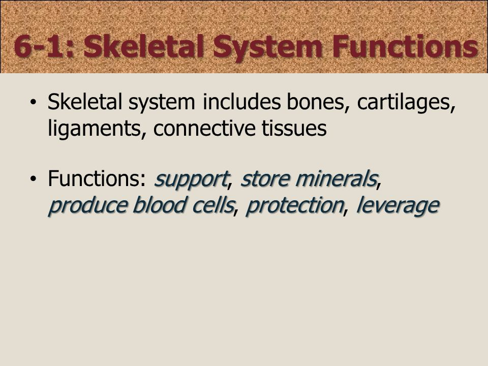 Chapter 6 Osseous Tissue & Bone Structure - ppt video online