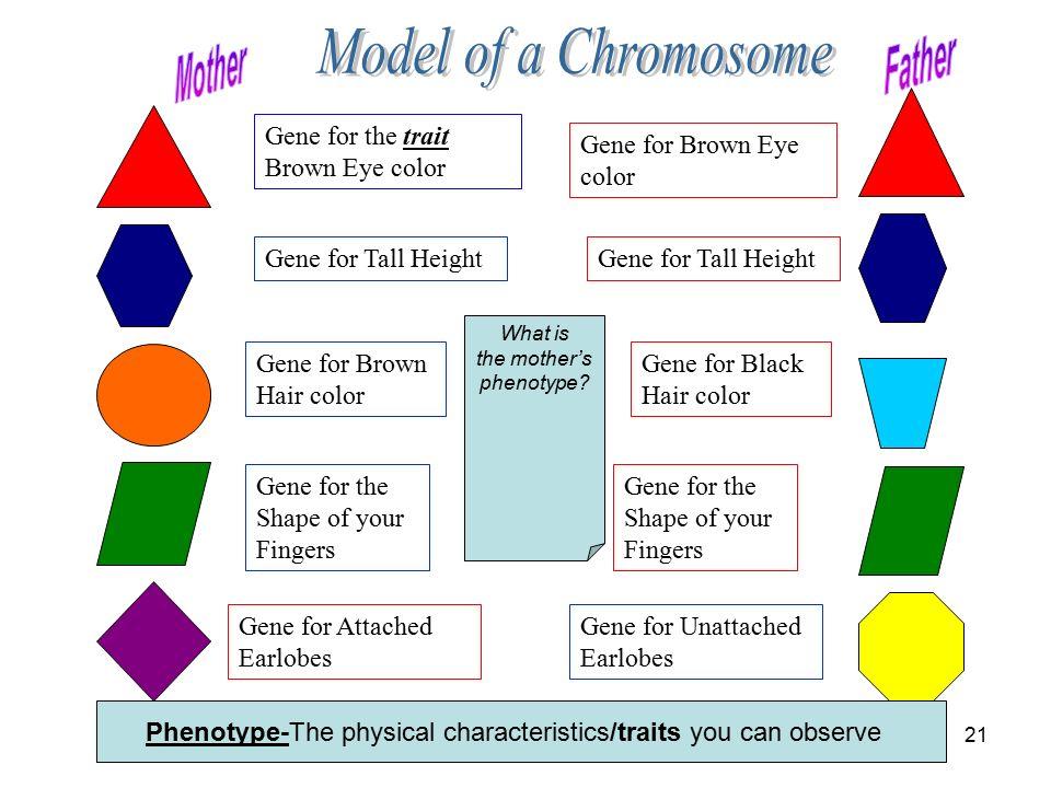 Genetics Grade Ppt Video Online Download