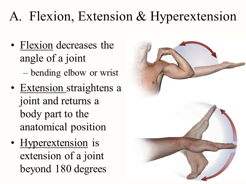I Joint Overview Arthrology Is The Study Of The Joints Ppt Video