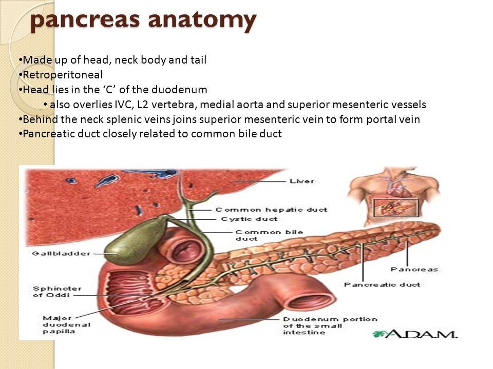 Nice Head Of Pancreas Photos - Human Anatomy Images ...