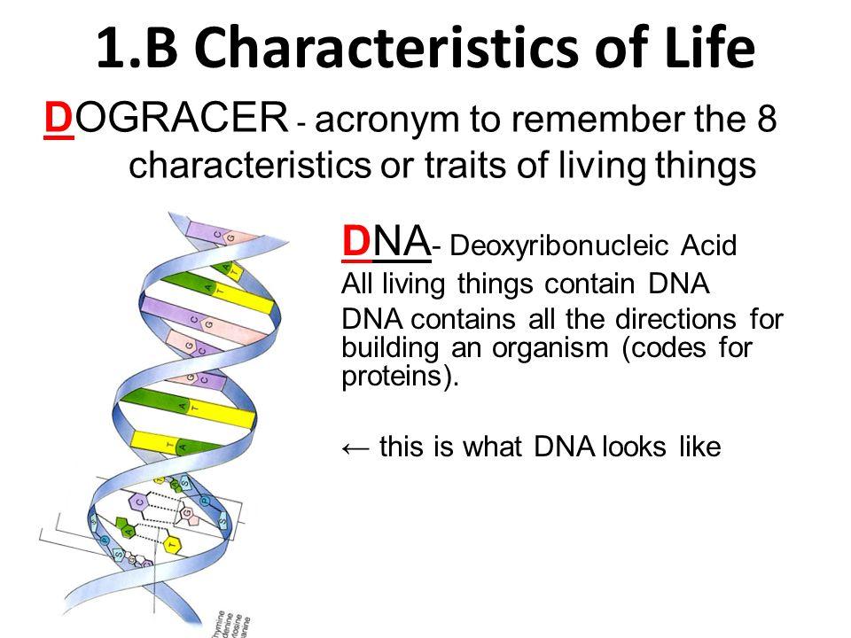 b characteristics of life