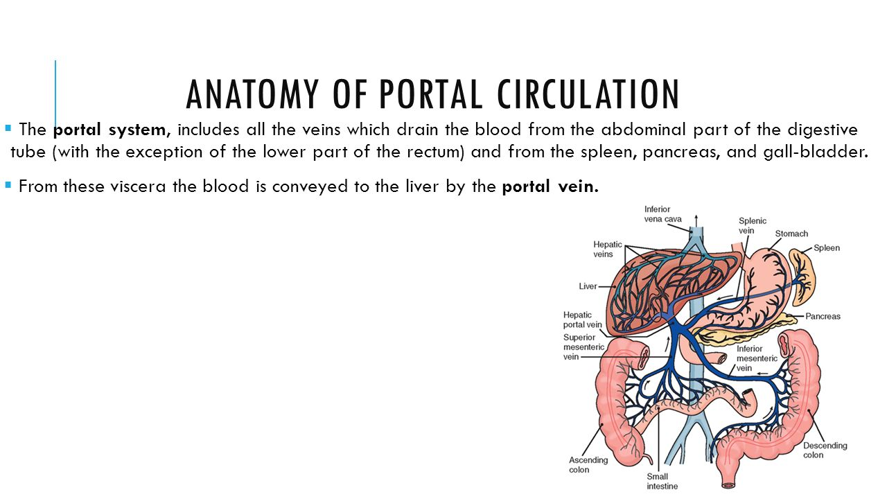 Seminar No 8 Portal Hypertension Ppt Video Online Download