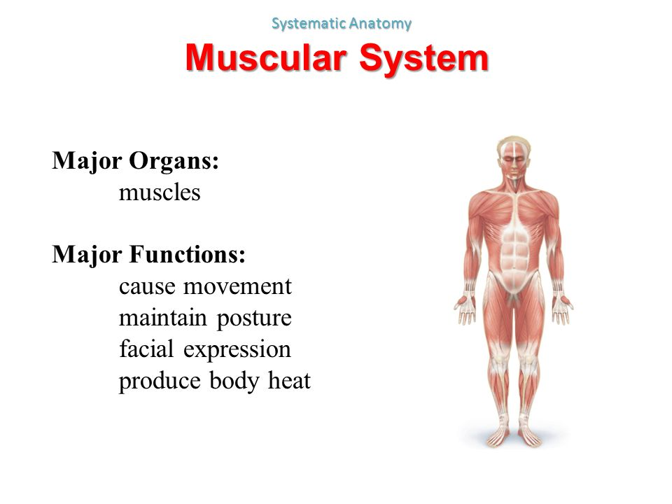 Anatomy A Chapter 1 Week ppt video online download