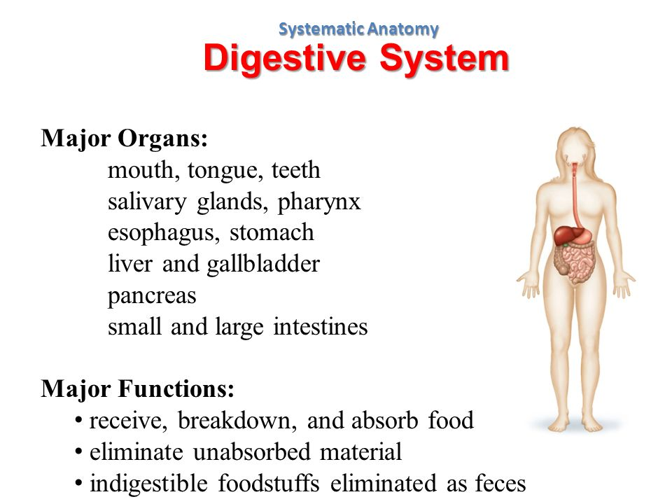 Anatomy a chapter 1 week ppt video online download digestive system major organs mouth tongue teeth ccuart Image collections