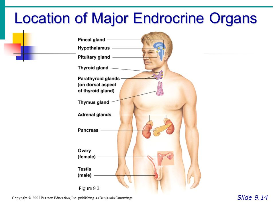 The Endocrine System Human Physiology Ppt Video Online Download