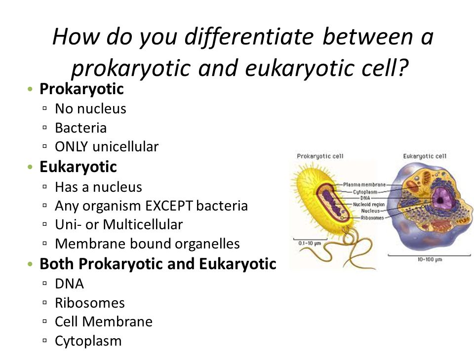 compare and contrast prokaryotic and eukaryotic cells
