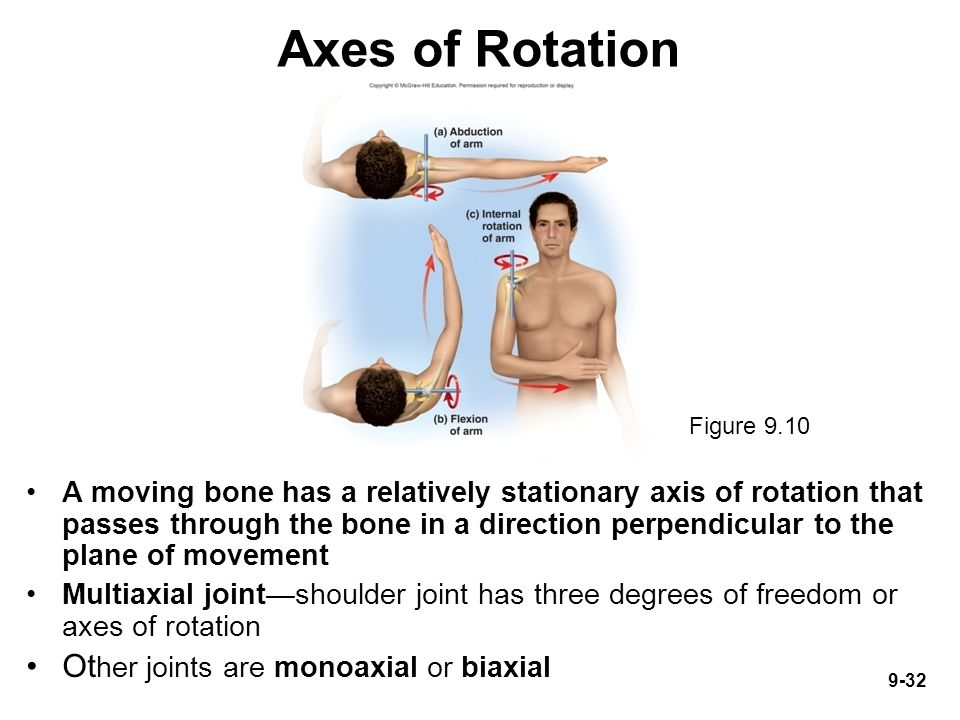 Introduction Joints link the bones of the skeletal system, permit ...
