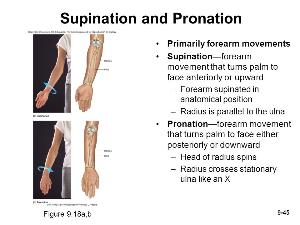Introduction Joints Link The Bones Of The Skeletal System Permit